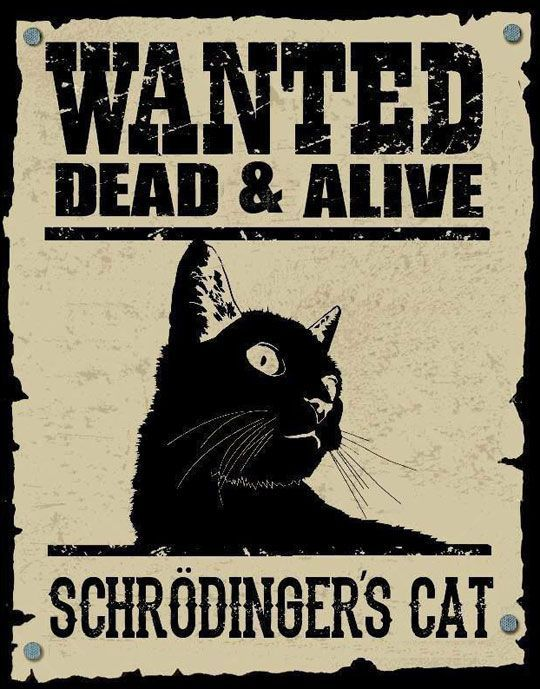 Wanted Dead & Alive - Schrödingers Cat.