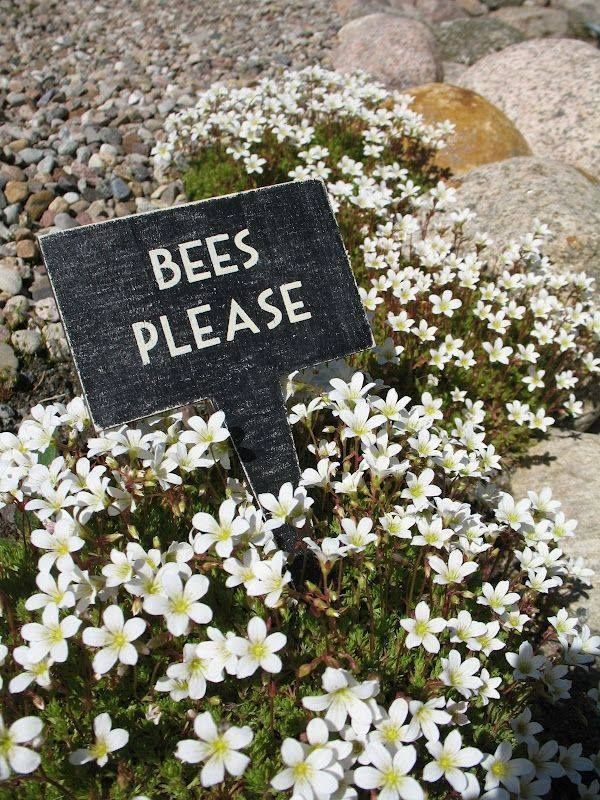 bees please?!