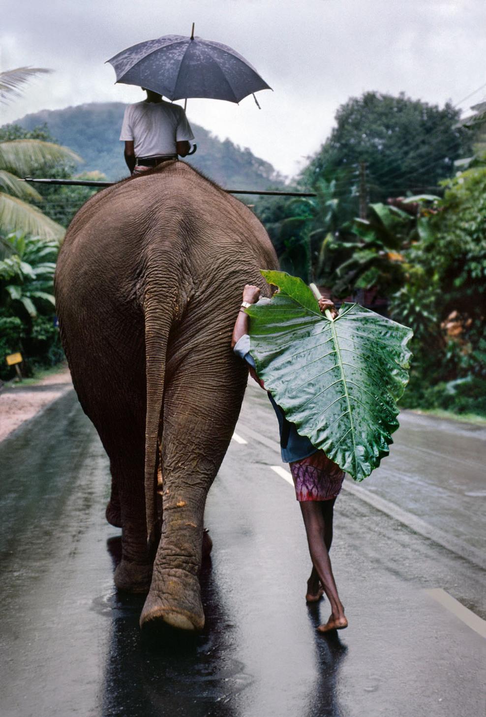 jap, elefanten - immernoch!