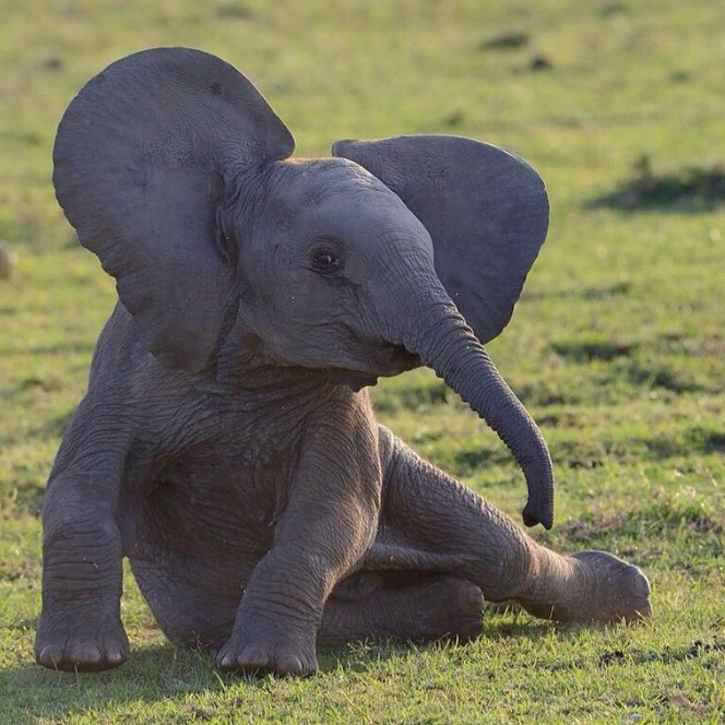 elefanten - schöne tiere!
