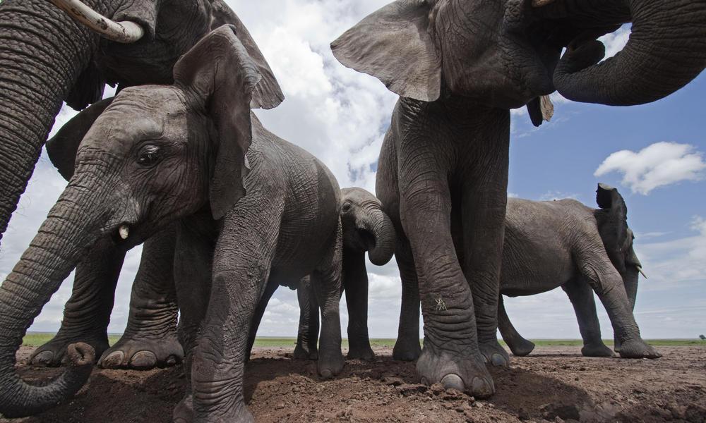 Elefanten | ja, war eine Überraschung!