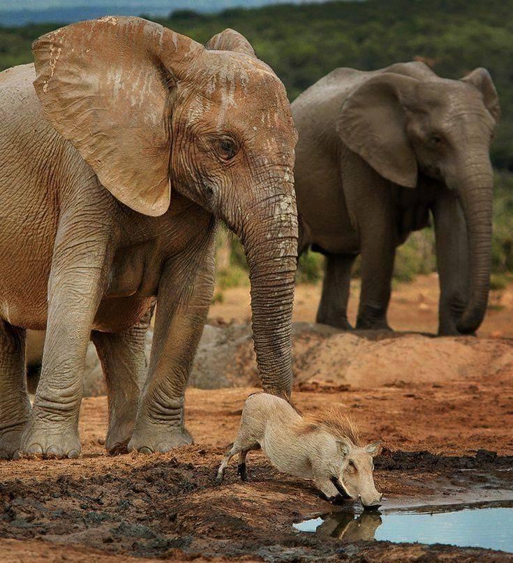 Elefanten, vielleicht die empathischsten Erdenbewohner.