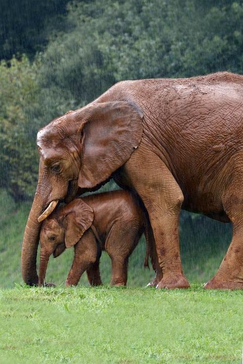 Elefanten, das ist richtig.