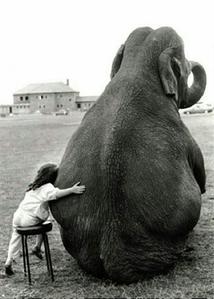 Elefant!